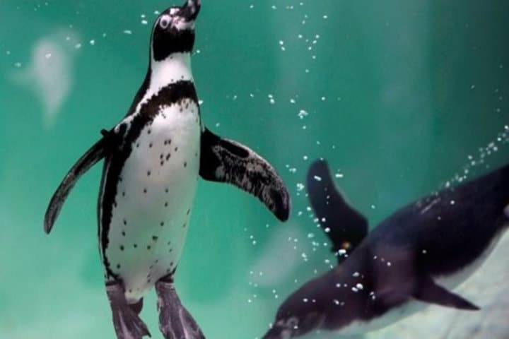 Pingüinario Veracruz
