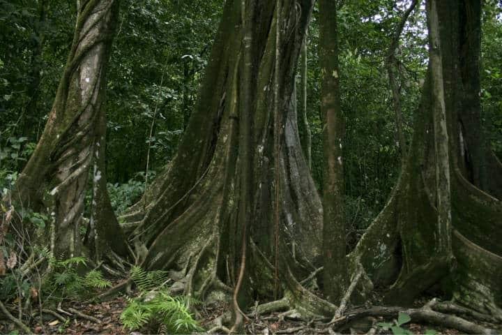 Parque Nacional Corcovado Foto Por Guillermo Larios