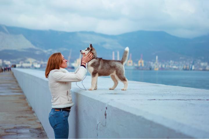 Aunque siendo sinceros, cualquier dueño de una mascota sabe que las voces cariñosas son bien recibidas Foto NIKITA KUVSHINOV