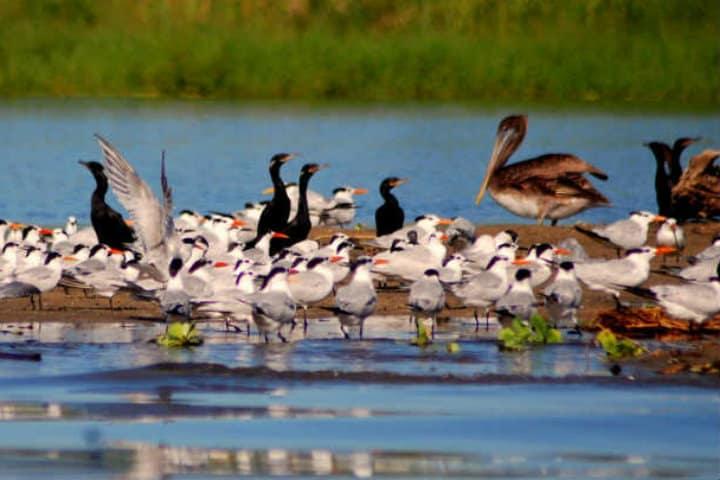 Aves en la Laguna de Manialtepec. Oaxaca. Imagen archivo