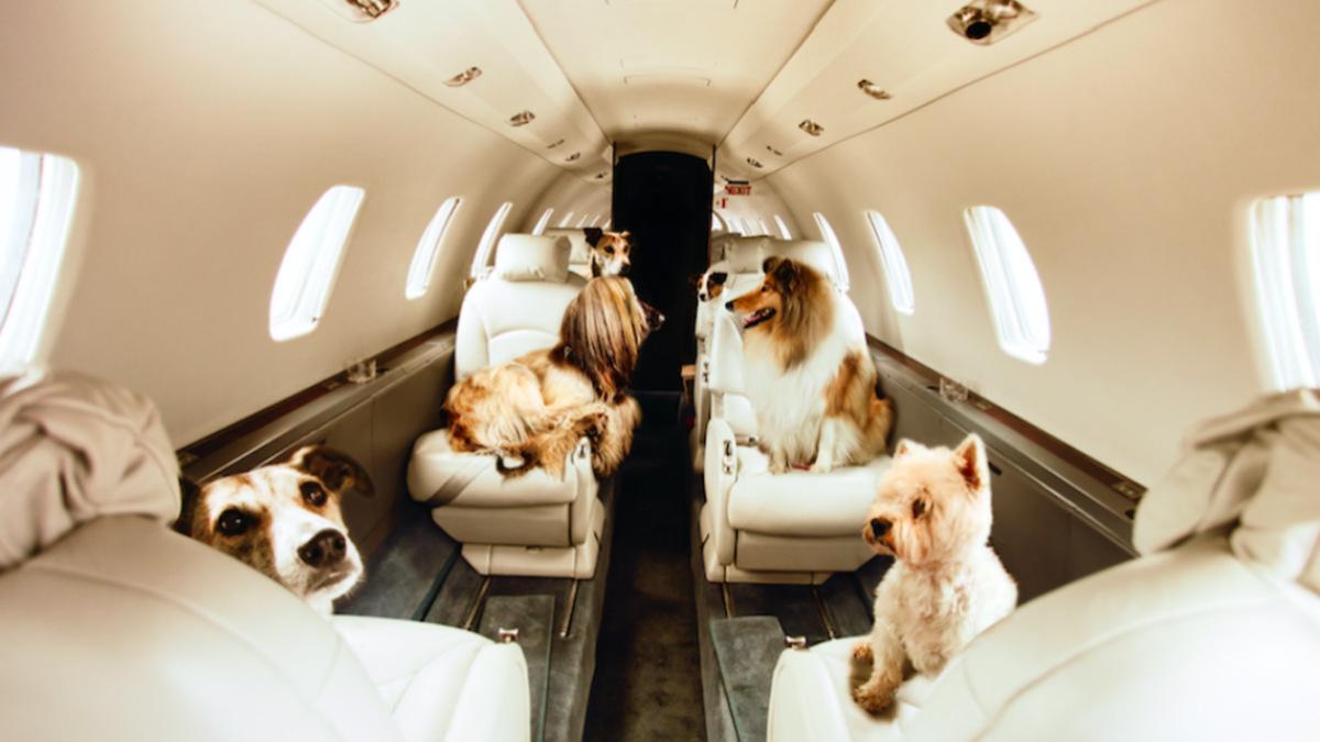 Cómo viajar con una mascota Foto 1stQuest