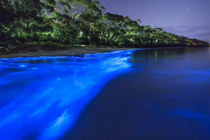Laguna fluorecente en Manialtepec. Oaxaca. Imagen: archivo