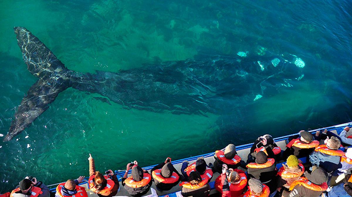 Temporada de ballenas en Argentina Foto infobae