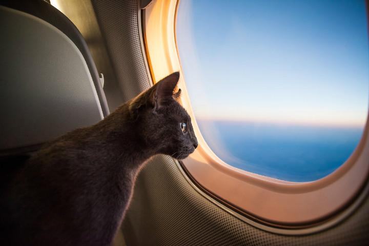 Una vez que pasen los filtros, estarán listos para viajar juntos Foto Canna-Pet