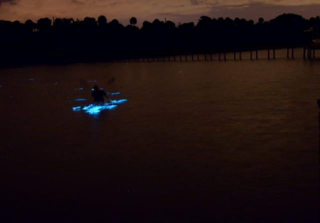Bioluminiscencia en puerto escondido oaxaca thecheapjerseys Gallery