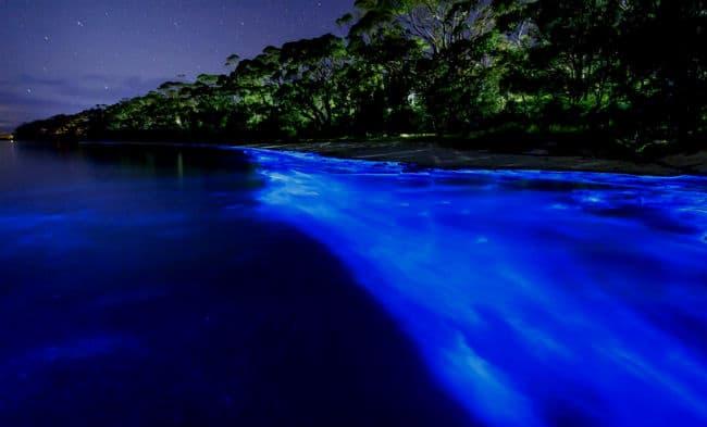 Bioluminiscencia en puerto escondido oaxaca altavistaventures Images