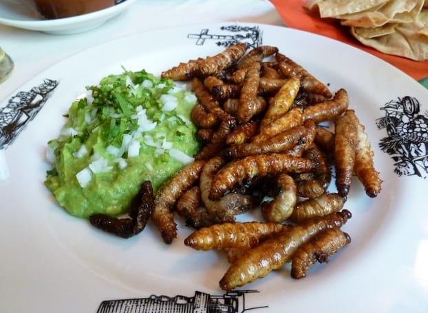 lista de insectos comestibles en mexico