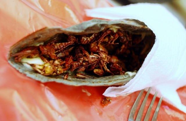 taco de chapulin