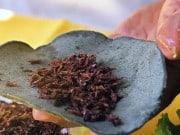taco de insecto comestible