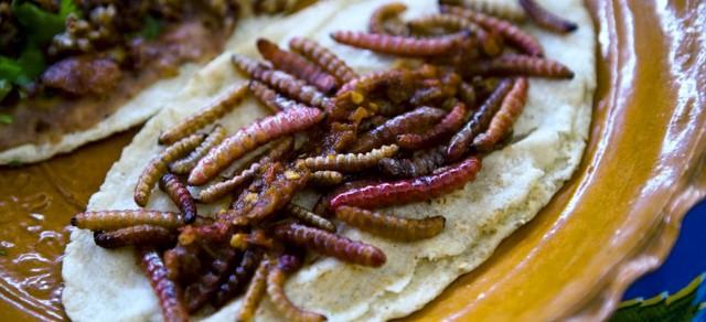 Sope de gusano de maguey. Foto: Archivo