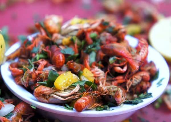 Insectos comestibles. Foto: Archivo