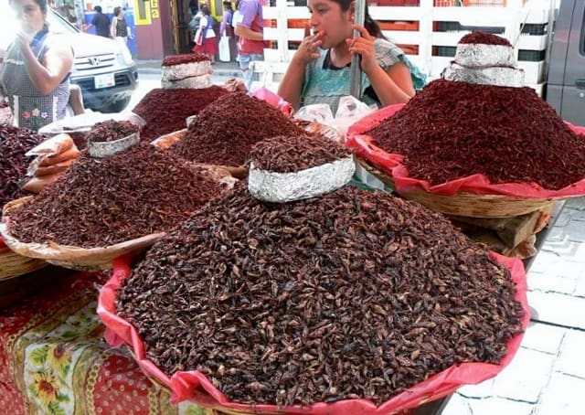 venta chapulines comestibles