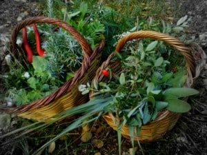 hierbas para temazcal