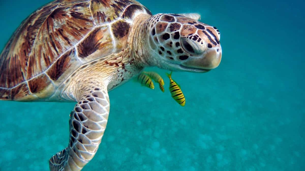 tortuga marina portada