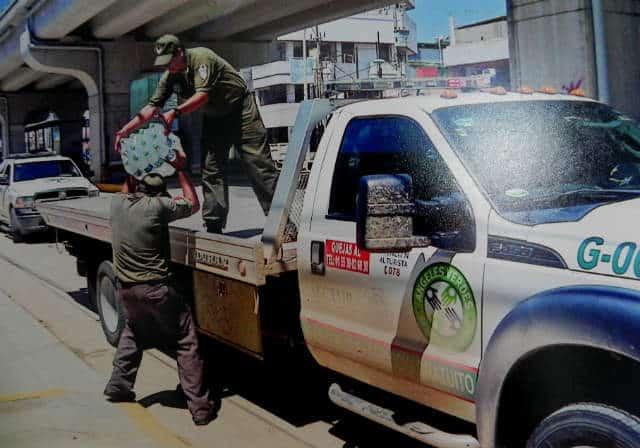 Ángeles verdes ayuda en caso de desastres. Foto: Archivo
