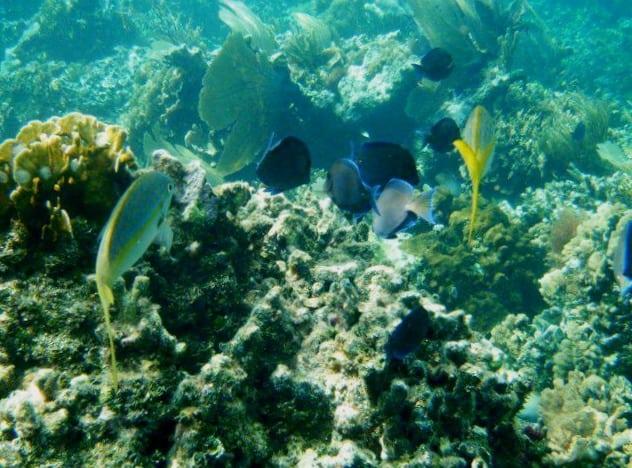 cayo-arena-dominicana pez