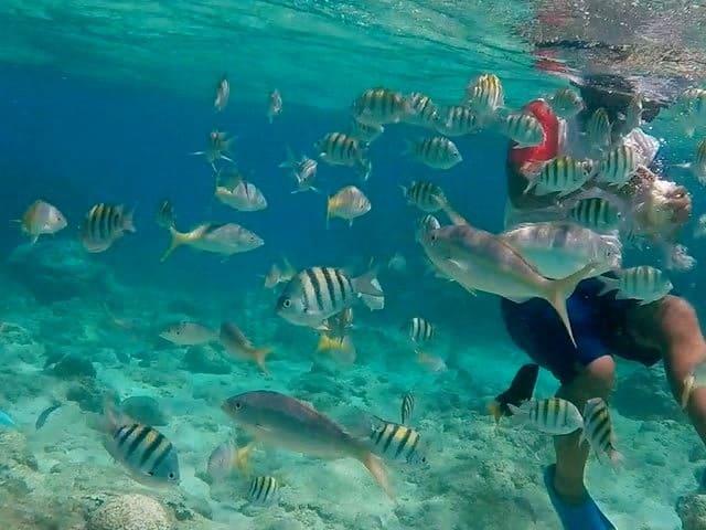 cayo-arena-dominicana snorkel