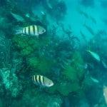 arrecife cayo arena