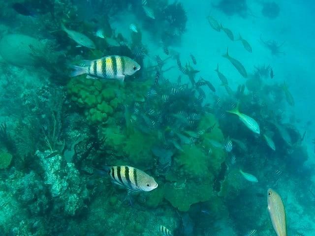cayo-arena-dominicana arrecife