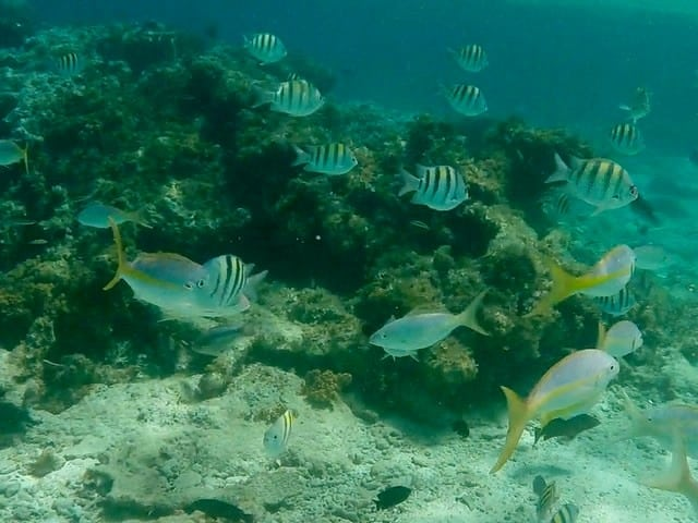 cayo-arena-dominicana coral