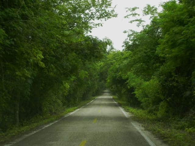 Calakmul carretera