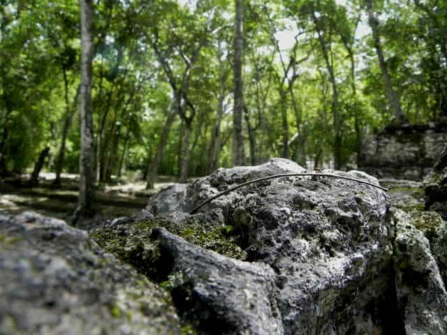 Calakmul rocas