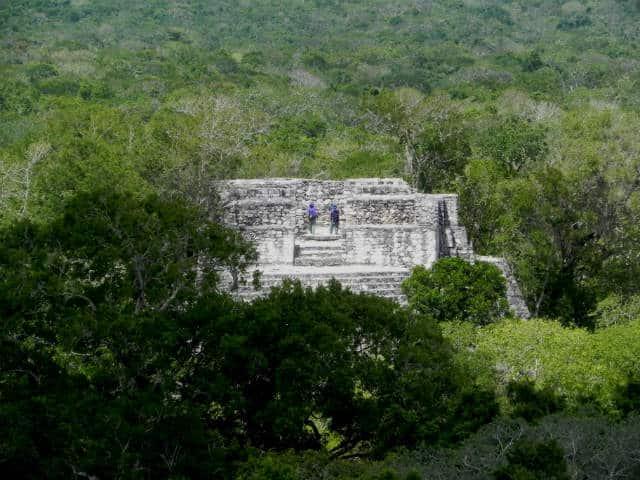 Calakmul templo selva