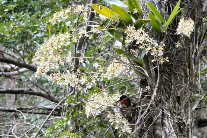 Gran variedad de flora y fauna.Foto.Ecotours Calakmul.11