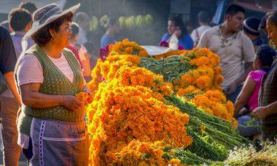 Mercado Jamaica Carlos Adampol Galindo