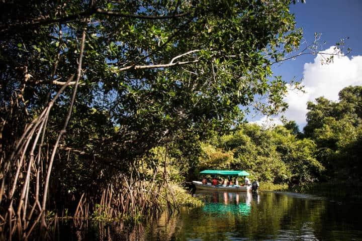 Recorrido por los pantanos de Centla. Imagen. México 1