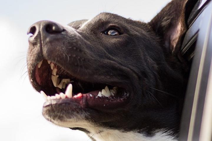 dog-1149964_1280 (1)