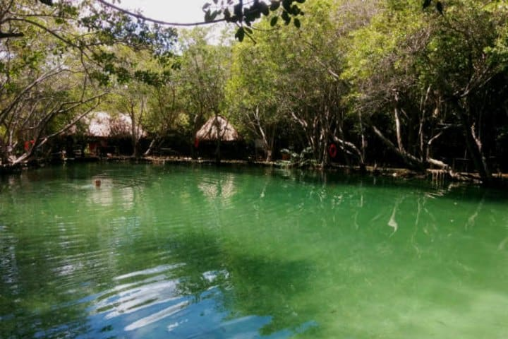 el-corchito-cenote-pajaros