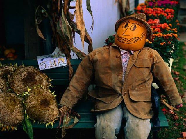 halloween hombre calabaza