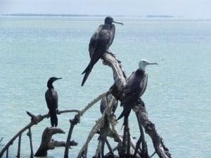 laguna de terminos aves
