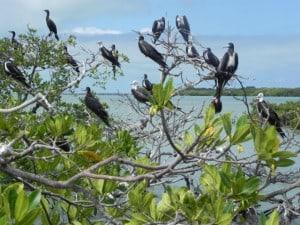 laguna de terminos colonia aves