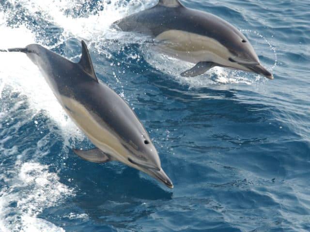 laguna de terminos delfines