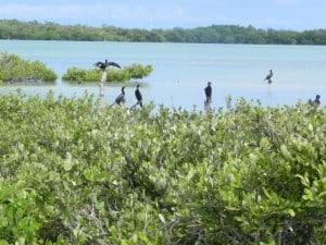 laguna de terminos isla de pajaros