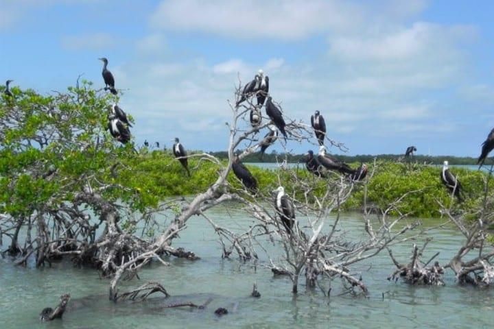 Isla de pájaros en la laguna de Terminos