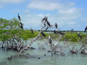 laguna de terminos manglar