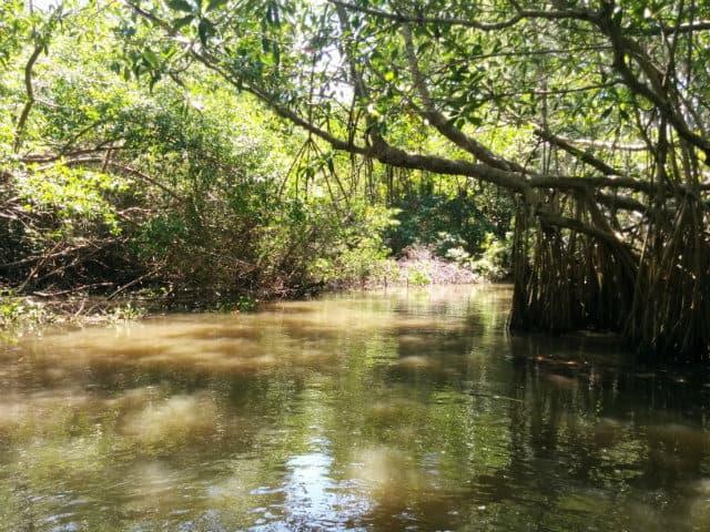 pantanos-centla-paseo