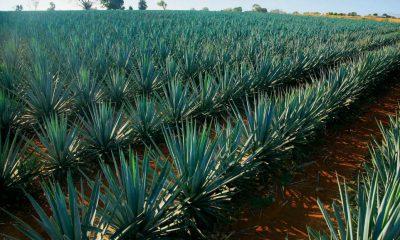 Tequila Jalisco denominacion de origen