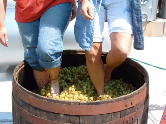 vinicola urbana pisado uvas