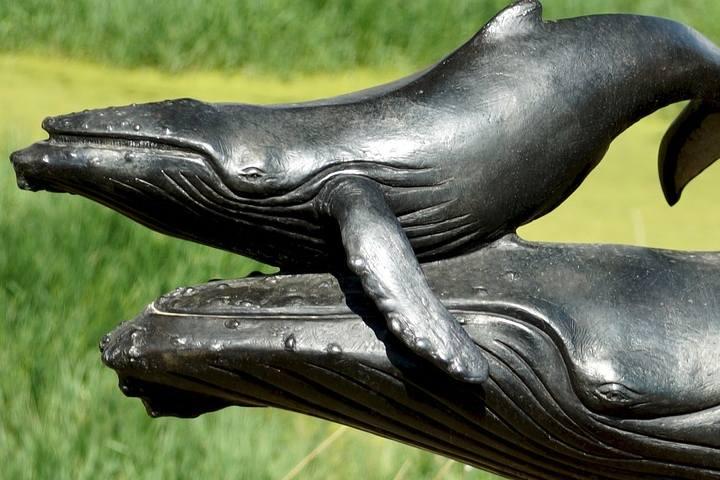 whale-3363221_1280 (1)