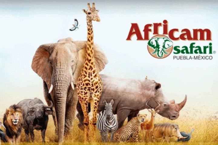 Africam Safari Puebla. Foto.Wish Qatar.1