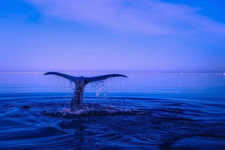 Bucear con ballenas. Foto: 12019