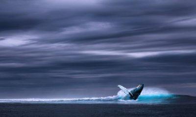 Bucear con ballenas. Foto: Three-shots