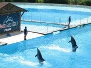 Dolphin Discovery Roma