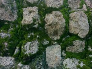 Edzna piedras