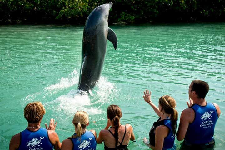 En contacto don los mamíferos marinos.Foto.Noticias de la Industria Turística.4