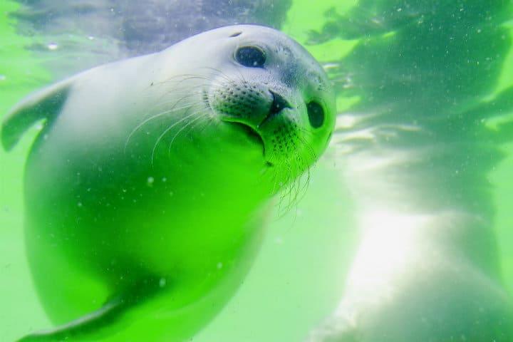 Leones marinos en los Galápagos.Foto.ToNic-Pics.1